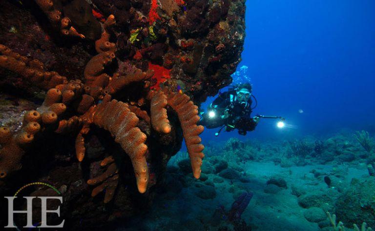 Octopus's Garden - HE Travel (January/February 2017) Main Image