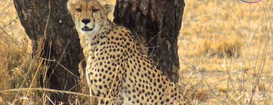 Gay Safari in Tanzania - HE Travel (November 13 to 22, 2019) Main Image