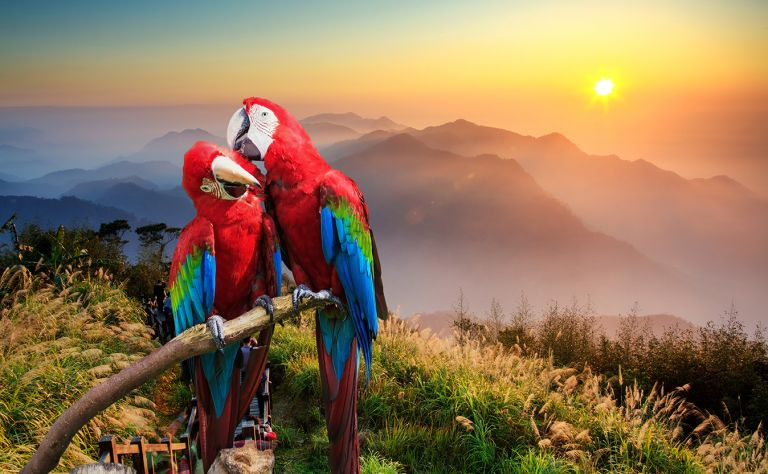 ECUADOR:  Amazon, Galapagos & Andes - Zenith Travel (May 12 - 25 and September 15 - 28 / 2016) Main Image