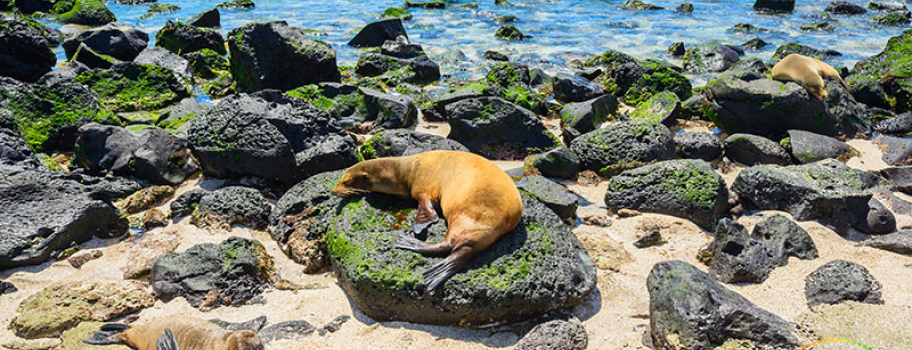 Gay Galapagos Multisport Adventure- HE Travel (March 2 to 10, 2020) Main Image