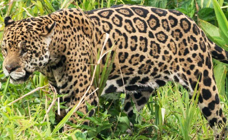 Toto Tours: Pantanal Wildlife Safari in Brazil Main Image